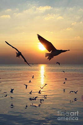 Sunset With Seagull Art Print
