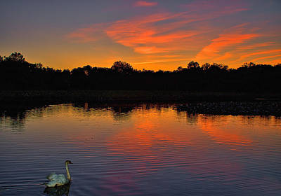 Princeton Photograph - Sunset With Swan by Steven Richman
