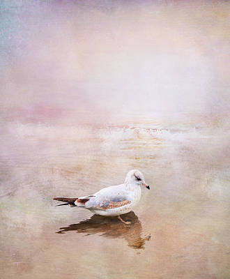 Photograph - Sunset With Young Seagull by Theresa Tahara