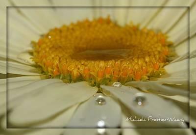 Photograph - Sunshine 2 by Michaela Preston