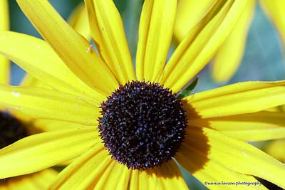 Photograph - Sunshine And Daisies by Nance Larson