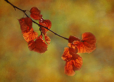 Photograph - Sunshine And Red  by Ivelina G