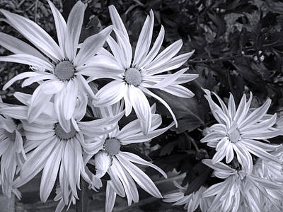 Photograph - Sunshine And Shadow Black And White by Barbara McDevitt