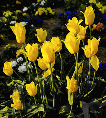 Photograph - Sunshine And Tulips by James C Thomas