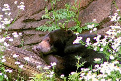 Photograph - Sunshine Bear by Adam Olsen