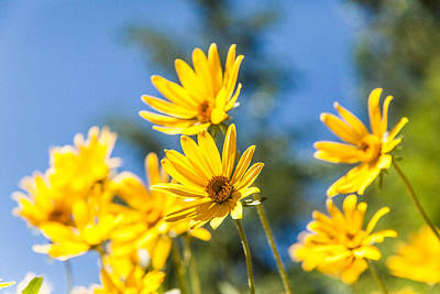 Wildflowers Photograph - Sunshine by Chad Dutson