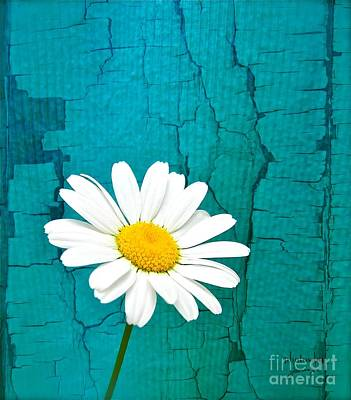 Photograph - Sunshine Daisy by Jamie Johnson