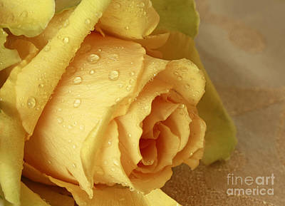 Sunshine Delight Yellow Rose Art Print by Inspired Nature Photography Fine Art Photography