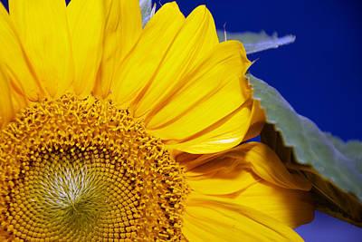 Photograph - Sunshine Flower by Lisa Knechtel