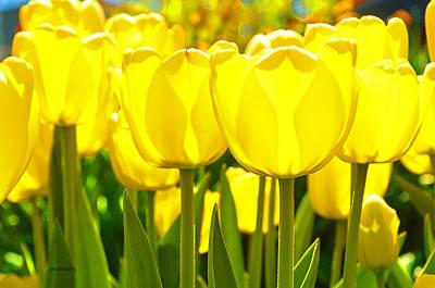 Photograph - Sunshine Flower by Patti Raine