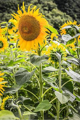 Sunshine Flowers Original