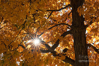 Photograph - Sunshine Gold by Ana V Ramirez