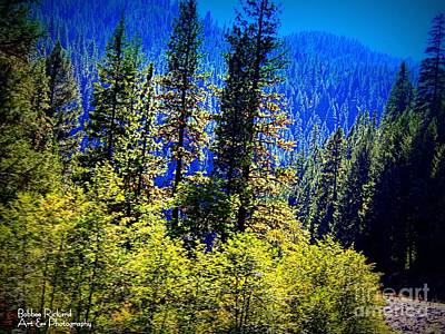 Photograph - Sunshine In The Forest by Bobbee Rickard