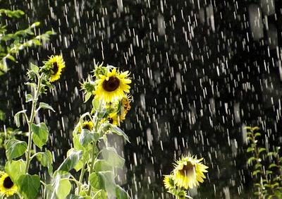 Photograph - Sunshine In The Rain by Elizabeth Sullivan