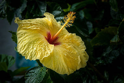 Photograph - Sunshine In The Rain by Paul Johnson
