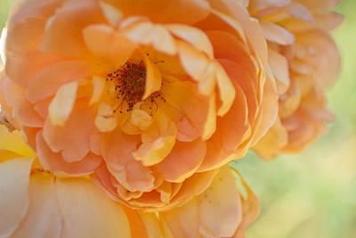 Photograph - Sunshine by Julie Andel