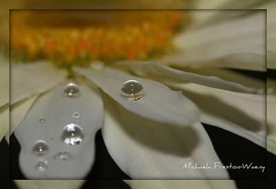 Photograph - Sunshine by Michaela Preston