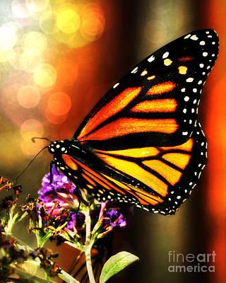 Sunshine Monarch  Art Print by Mindy Bench