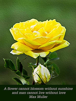 Sunshine On A Yellow Rose Art Print