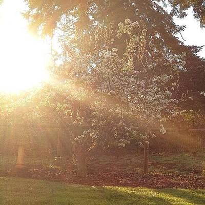Tree Photograph - Sunshine On My Favorite Pear Tree All by Blenda Studio