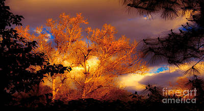 Photograph - Sunshine On The Tree Tops After A Rain Storm  by Jerry Cowart