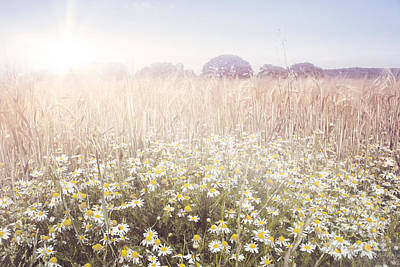 Sunshine Over The Fields Art Print by Natalie Kinnear