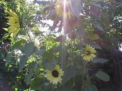 Wall Art - Drawing - Sunshine Through Sunflowers by Mike Friedman