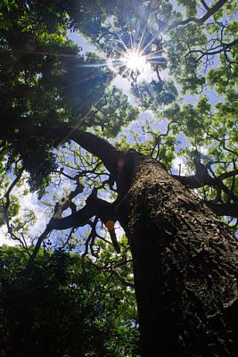 Sunshine Through The Trees Art Print by Matt Radcliffe
