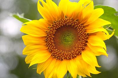 Photograph - Sunshine by Tracy Male