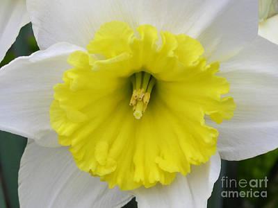 State Love Nancy Ingersoll - Sunshine Two by Arlene Carmel