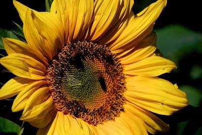 Photograph - Sunshine's Blessing by Eric Tressler