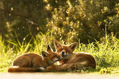 Fox Kit Photograph - Sunshower by Roeselien Raimond