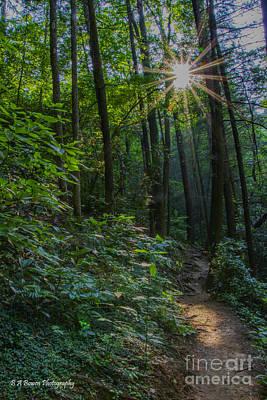 Photograph - Sunstar Along The Trail by Barbara Bowen