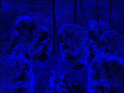 Porcupine Photograph - Super Blue Picky Eaters In The Moonlight by LeeAnn McLaneGoetz McLaneGoetzStudioLLCcom
