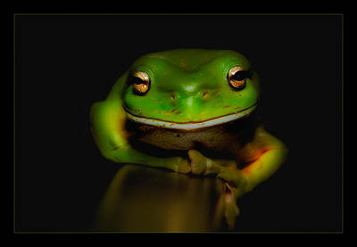 Photograph - Super Frog 01 by Kevin Chippindall