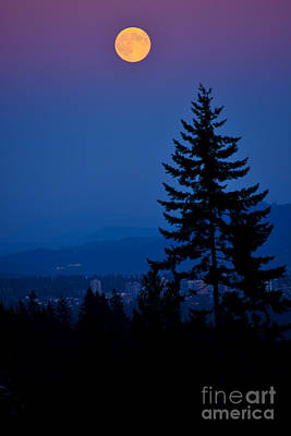 Photograph - Super Full Moon 2 by Terry Elniski