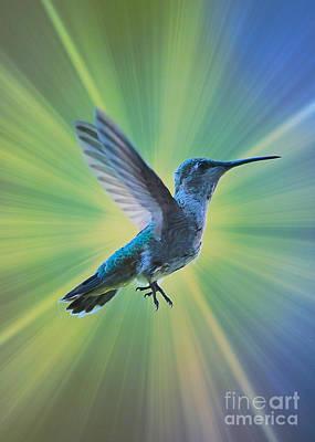 Super Hummingbird Art Print by Carol Groenen