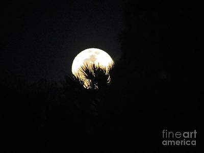 Photograph - Super Moon by Fortunate Findings Shirley Dickerson