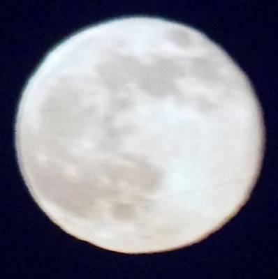 Photograph - Super Moon by Phyllis Spoor