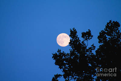 Photograph - Super Moon by William Norton