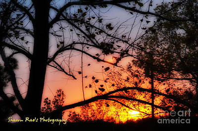 Photograph - Super Sunset by Sharon Farris