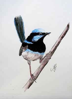 Superb Fairy Wren Art Print
