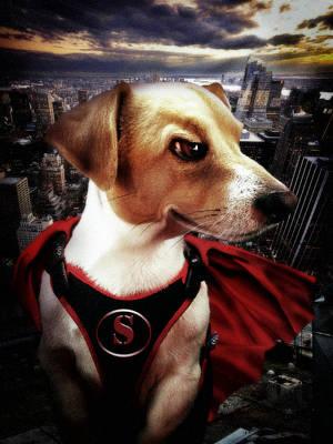 Digital Art - Superdog by Alessandro Della Pietra