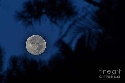 Photograph - Supermoon August 2014  by Lynda Dawson-Youngclaus