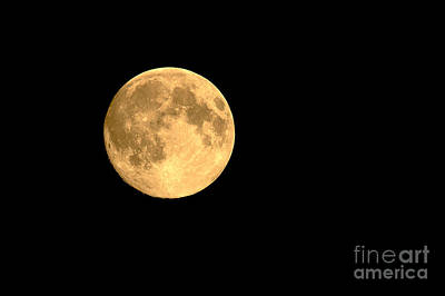 Photograph - Supermoon August 2014 by Sharon Talson