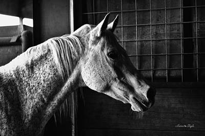 Gray Horse Photograph - Supper Time by Karen Slagle