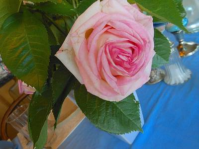 Photograph - Supper Time Rose 2 by John Norman Stewart
