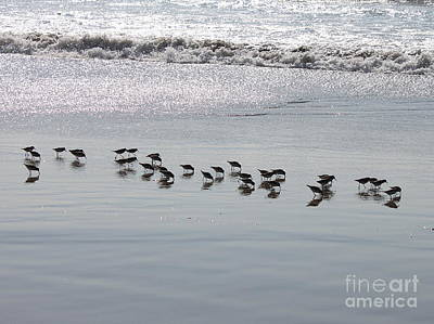Photograph - Surf And Sandpipers by Erica Hanel
