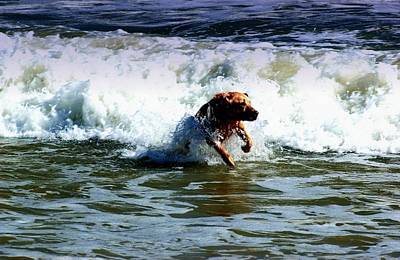 Photograph - Surf Dog by Bob Pardue