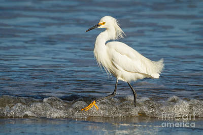 Photograph - Surf Egret by Alice Cahill